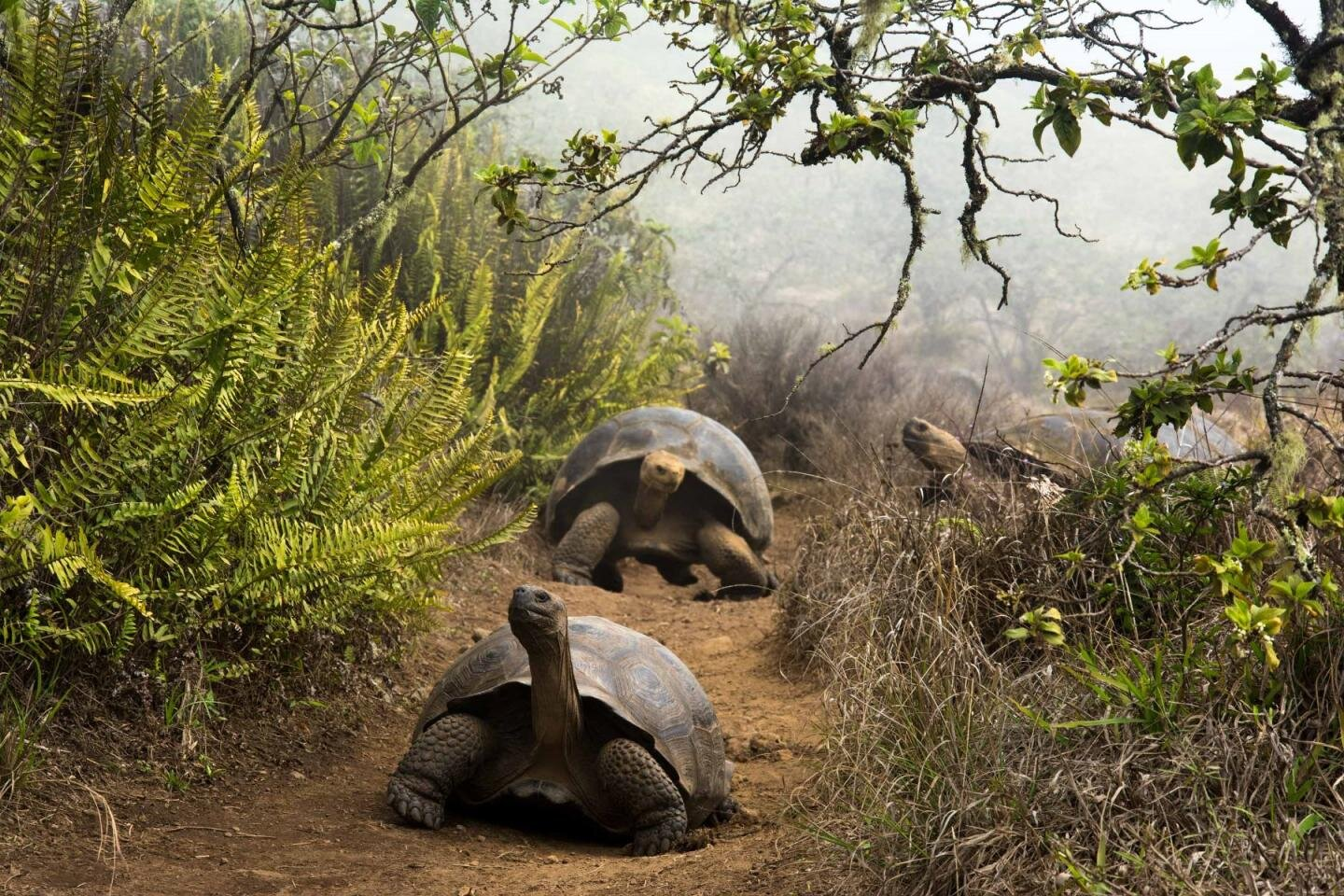 Human action key to antibiotic resistance in giant tortoises of Galapagos