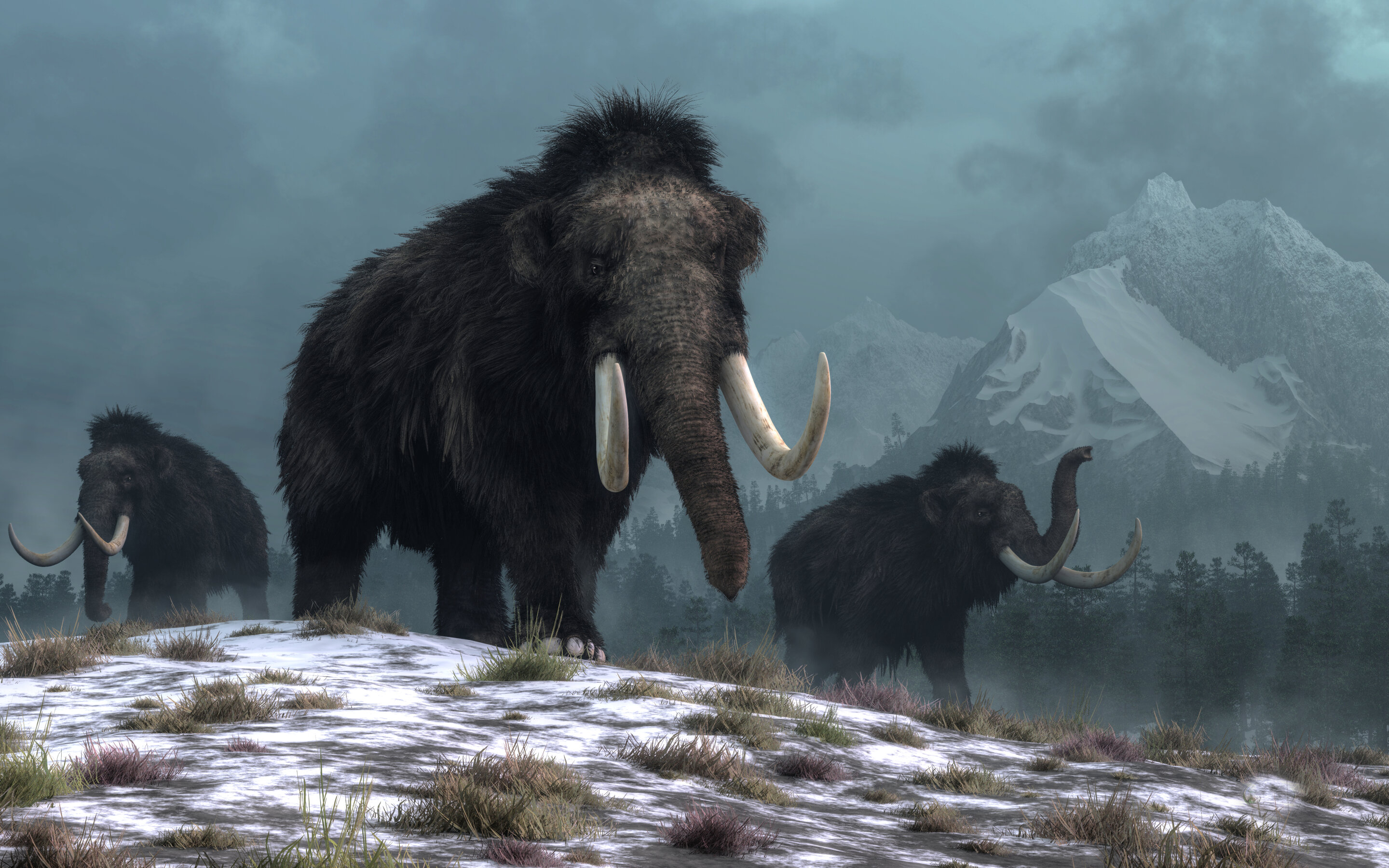 Humans did not cause woolly mammoths to go extinct—climate change did: study - Phys.org