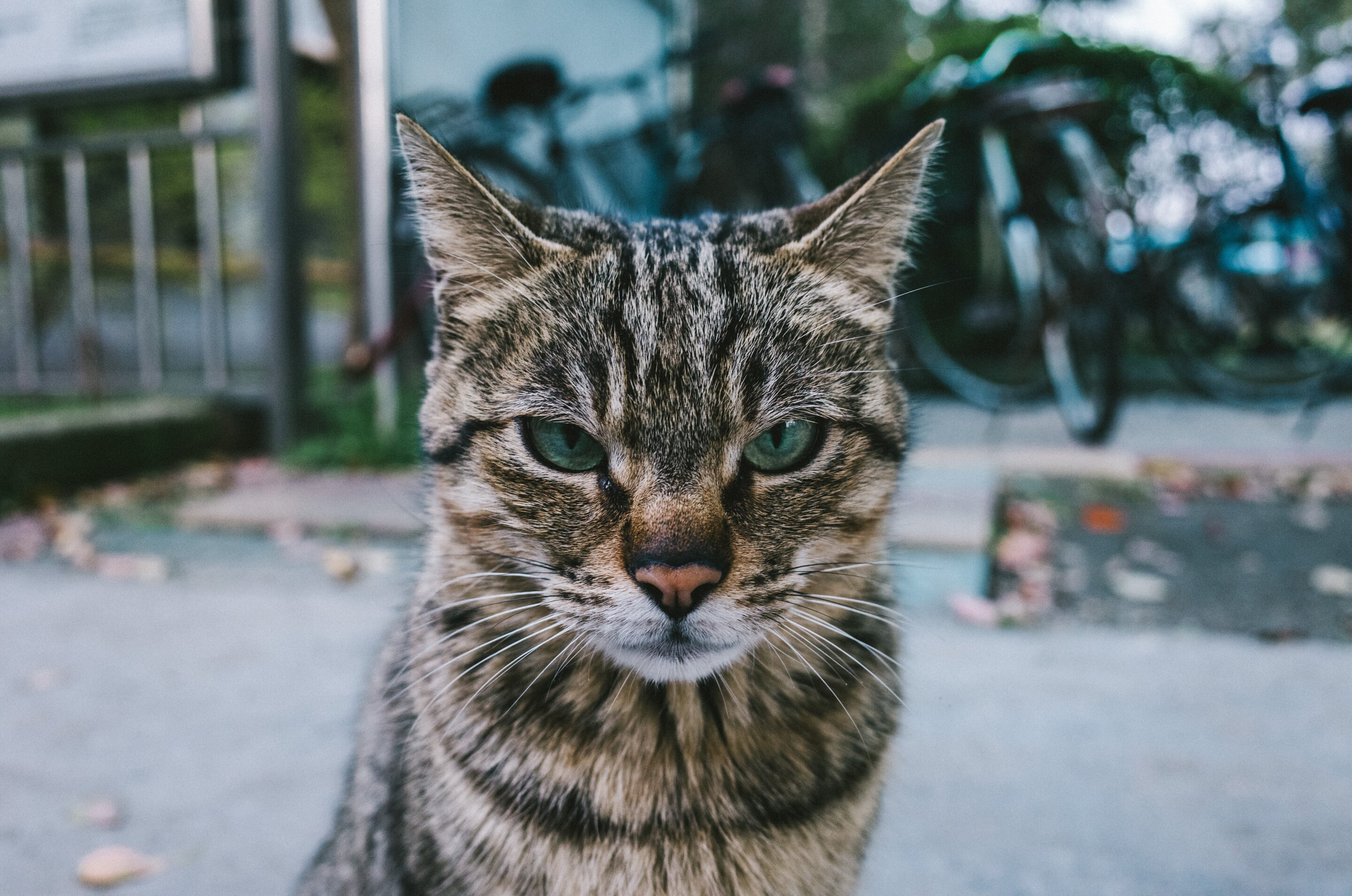 Study: Letting cats decide when to be petted avoids hostility and increases their affection