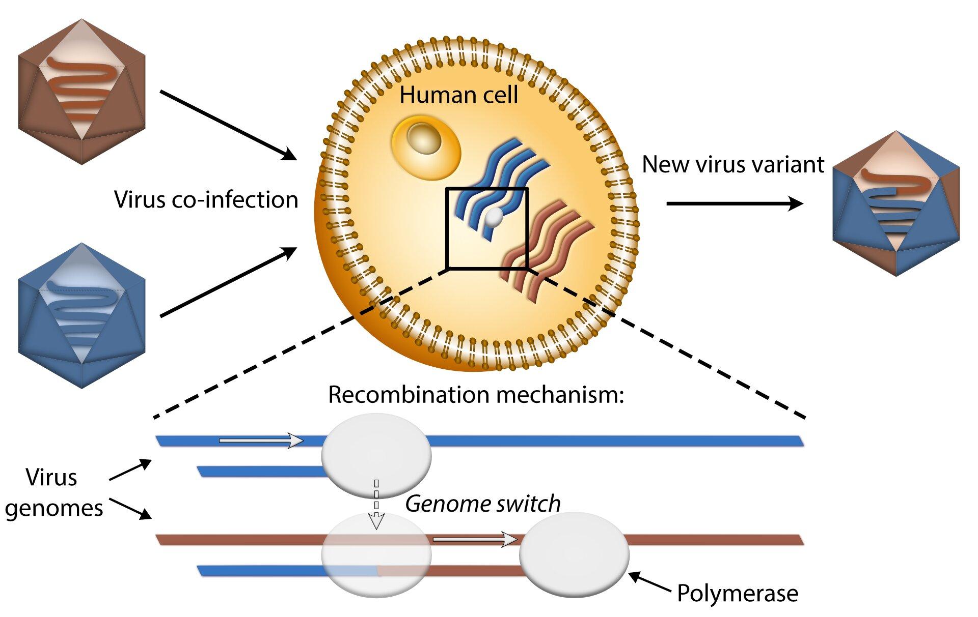 Mechanism Underlying The Emergence Of Virus Variants Unravelled - Todayuknews - Todayuknews