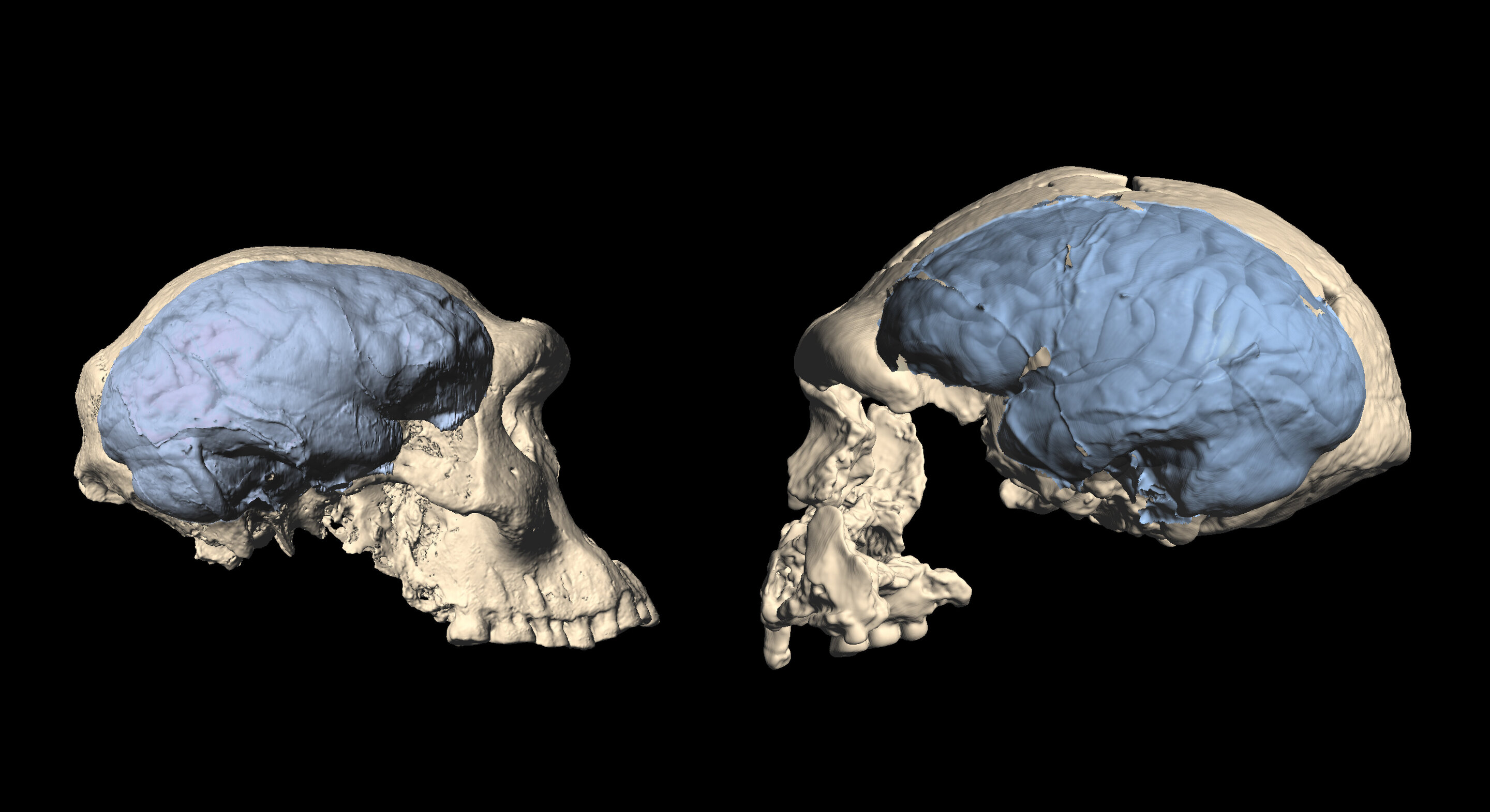 photo of Modern human brain originated in Africa around 1.7 million years ago image