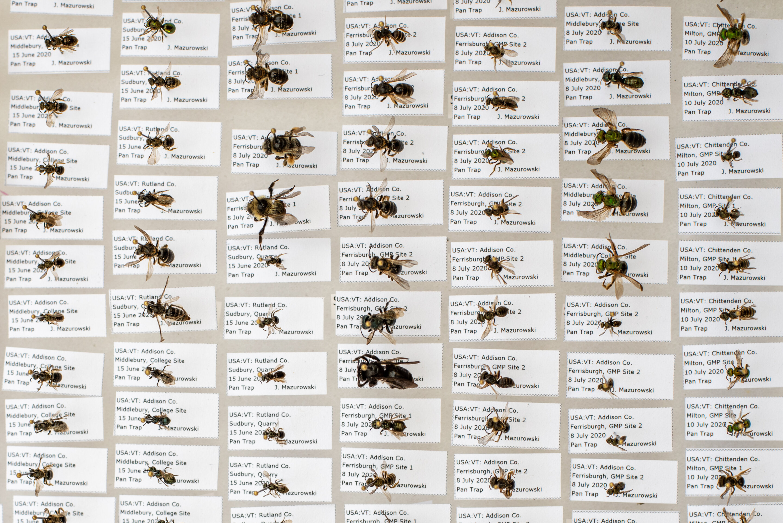Museum collections predict species abundance in the wild