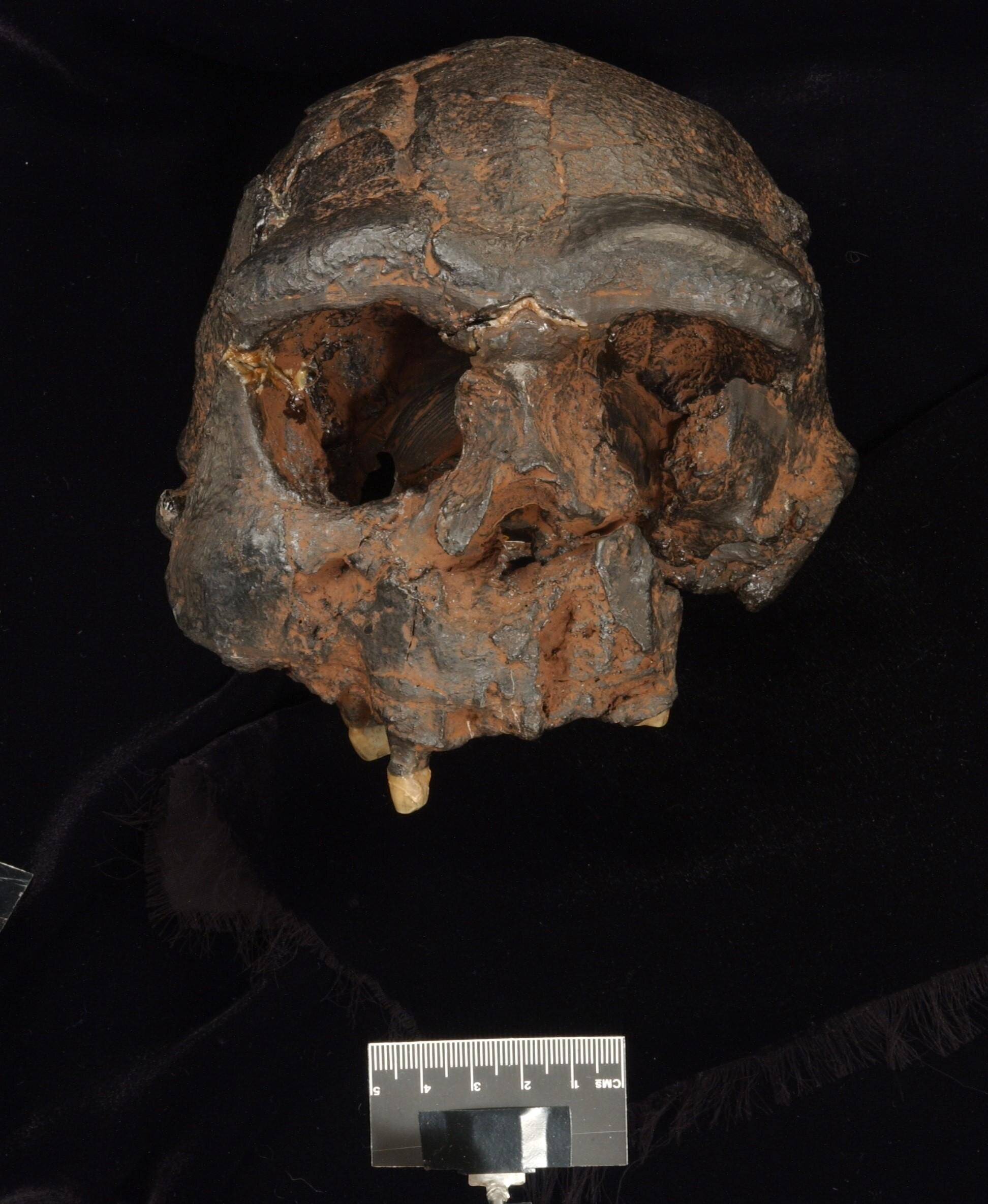 New evidence in search for the mysterious Denisovans
