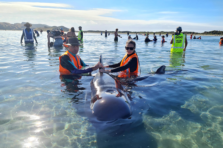 photo of New Zealand volunteers refloat 28 whales in rescue effort image