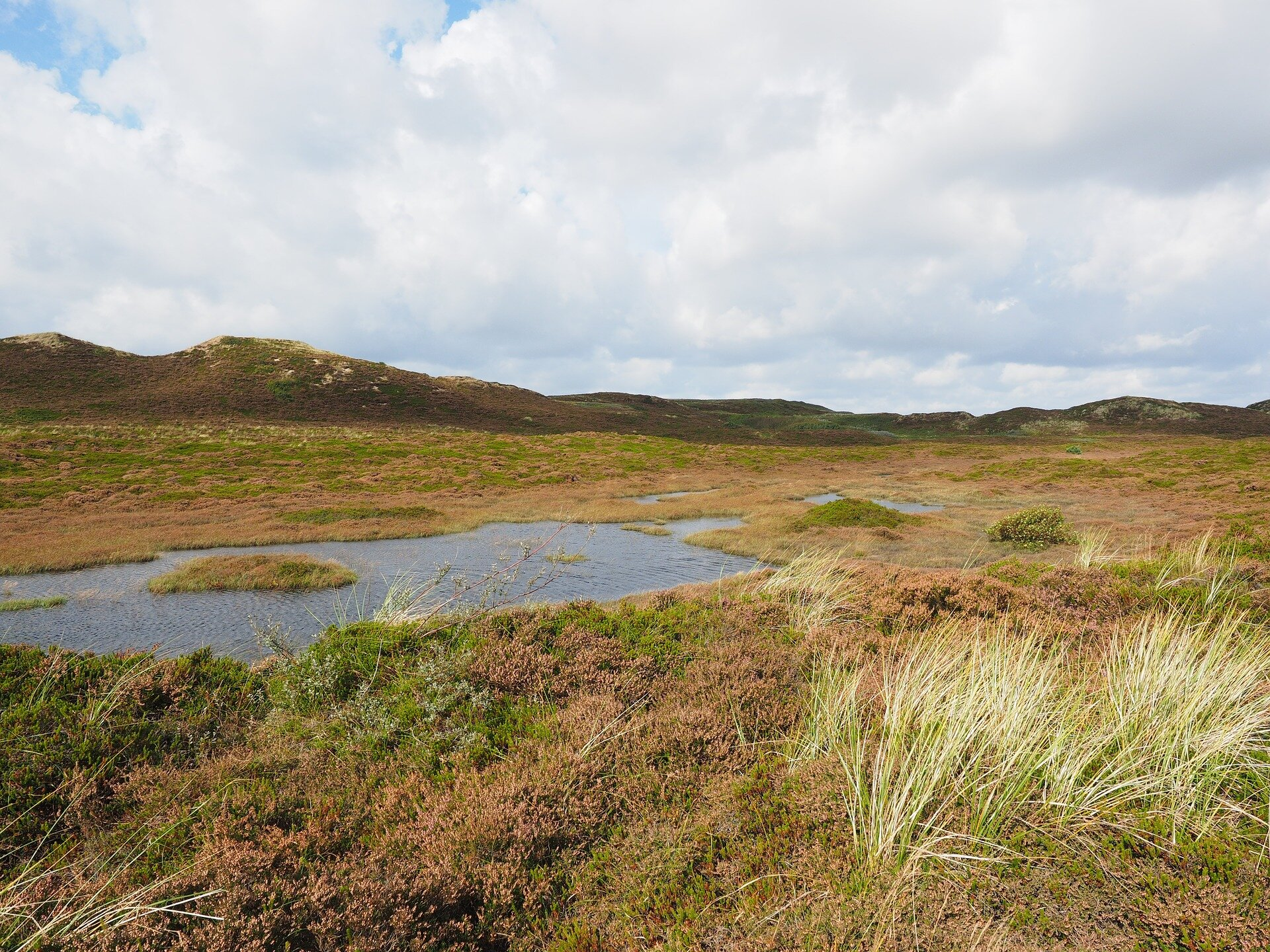 Valuable peatlands at risk of disappearing