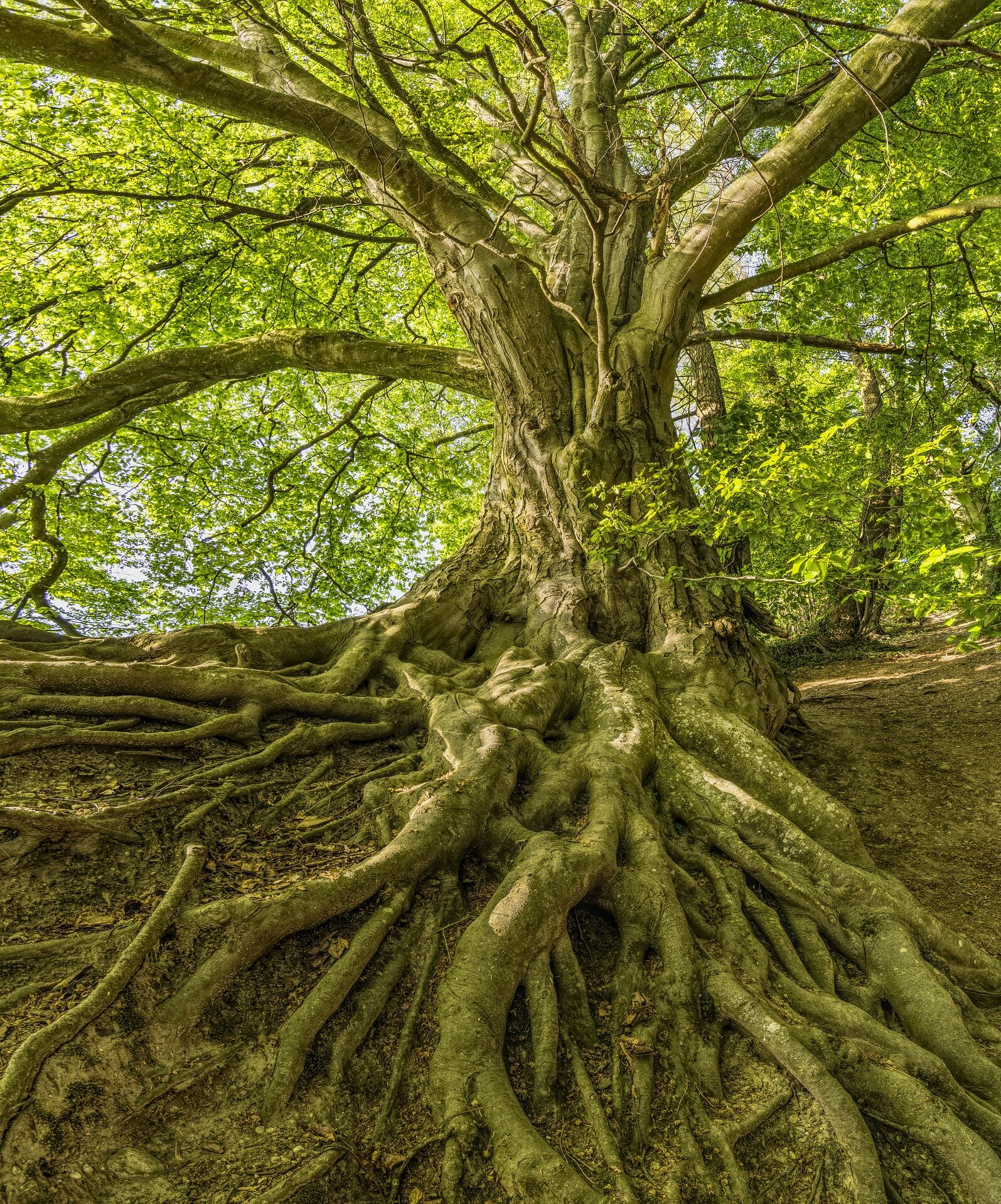 photo of Study on plant roots challenges nature of ecological trade-offs image