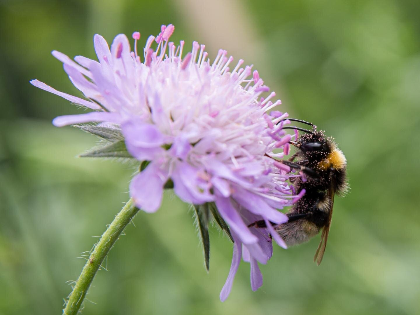 Plant provenance influences pollinators