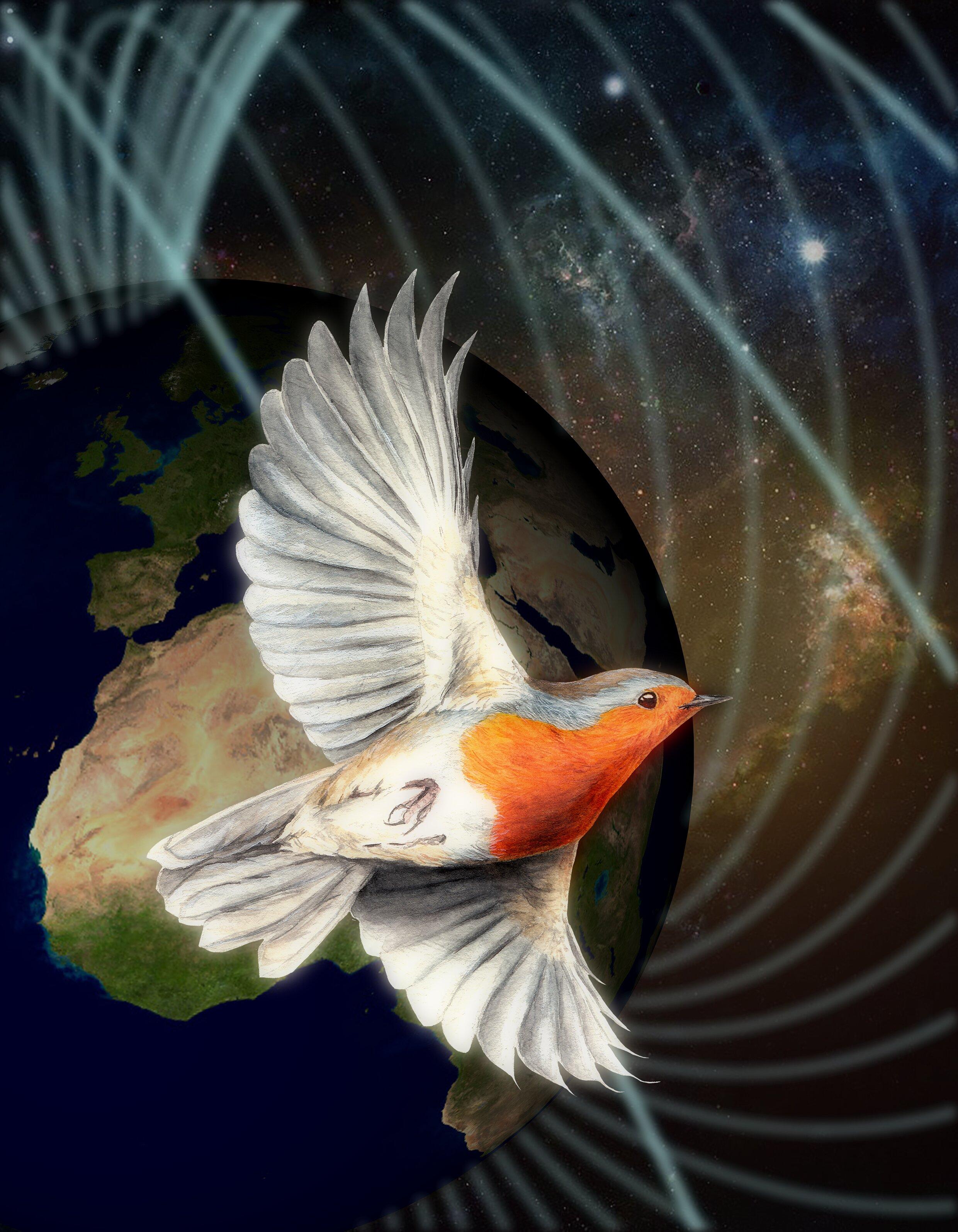 Quantum birds: Shedding light on the mechanism of magnetic sensing in birds