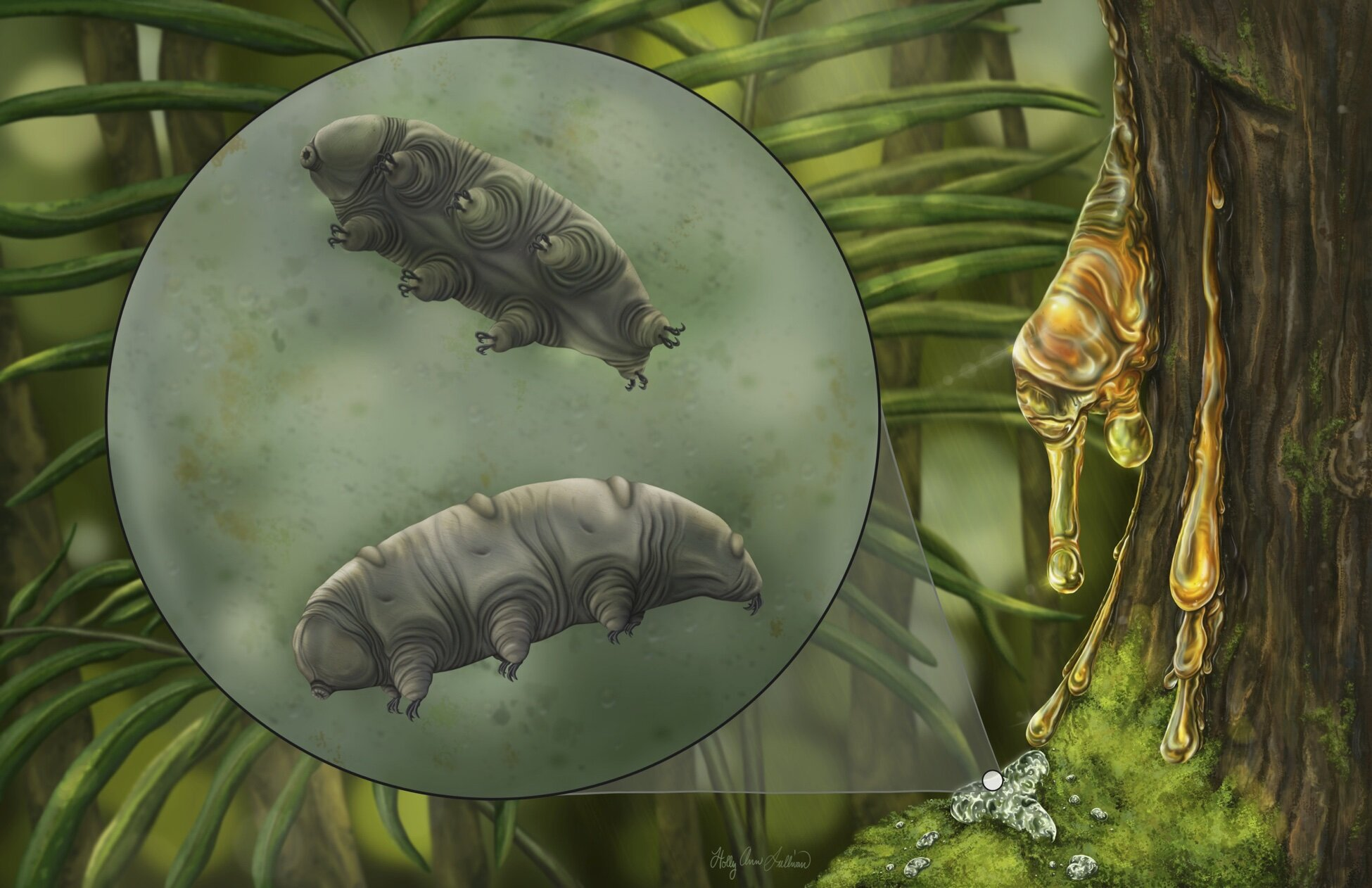 Researchers describe new tardigrade fossil found in 16 million year old Domincan amber