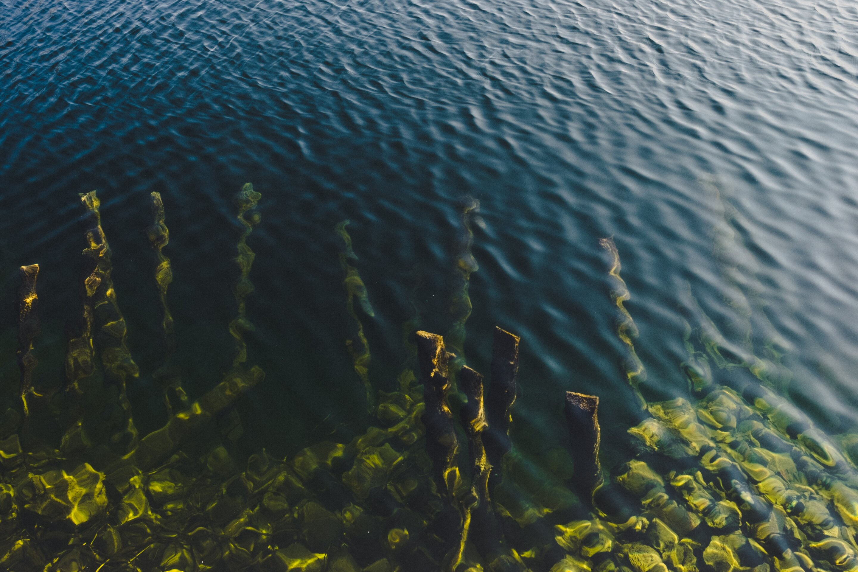 photo of International team maps world's giant kelp forests image
