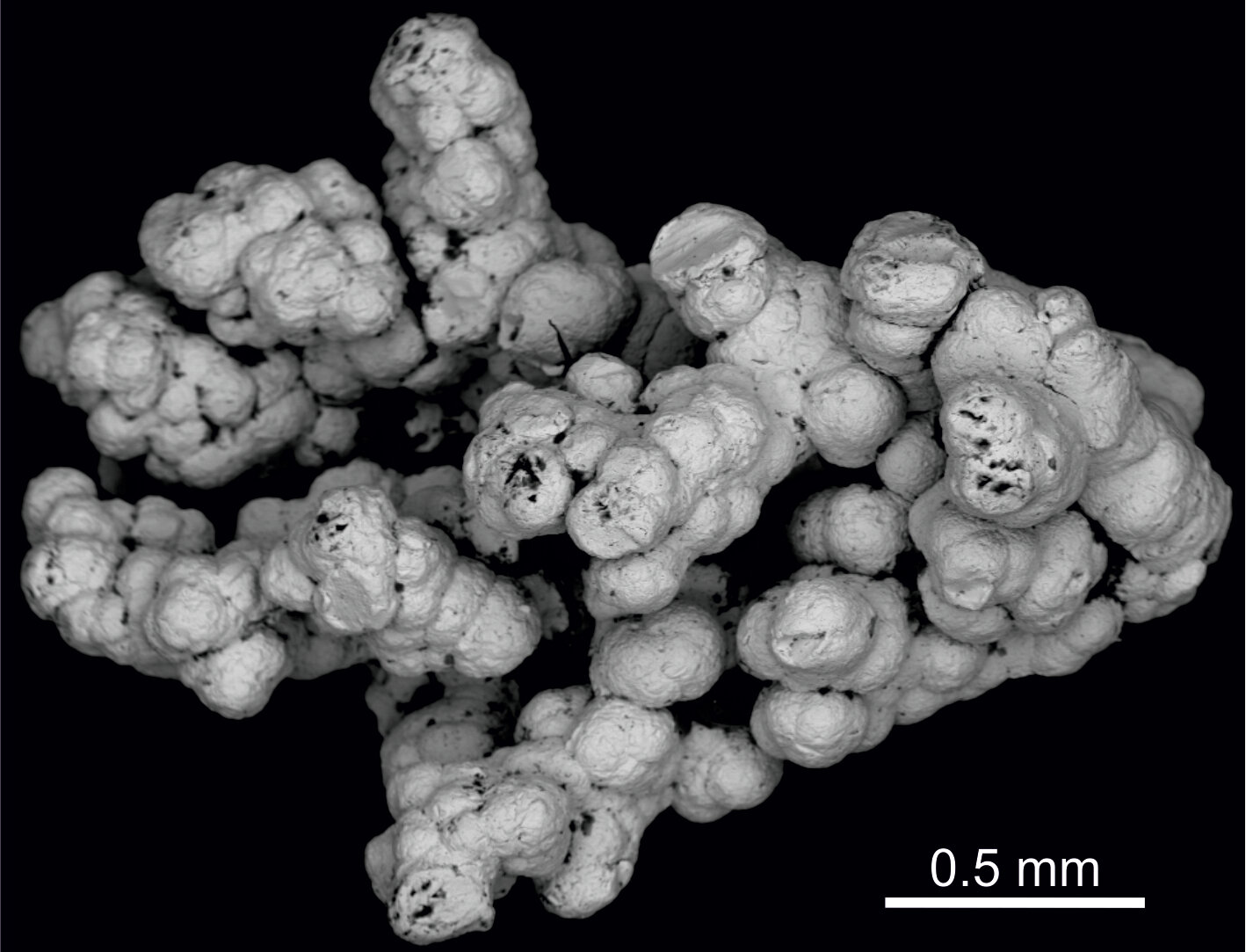 Selenium may support deep microbial life in Earth's continental crust - Phys.org