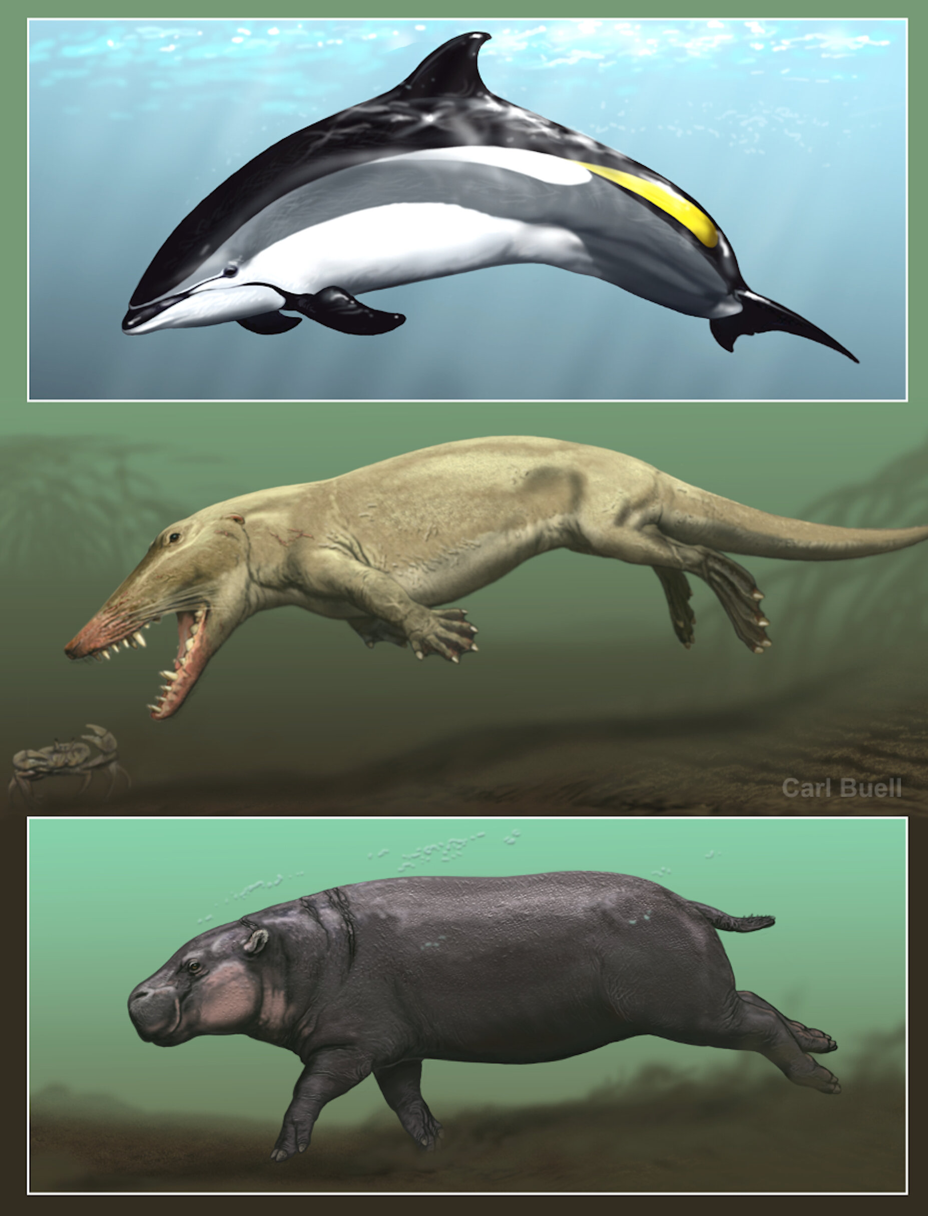 Skin deep: Aquatic skin adaptations of whales and hippos evolved independently