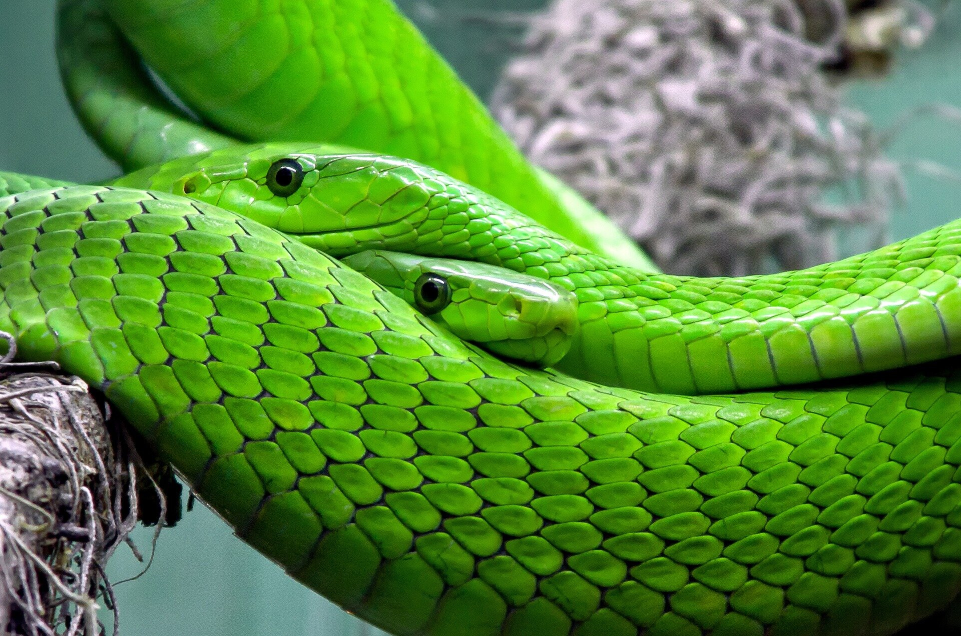 Snake species from different terrains surrender surface secrets behind slithering success