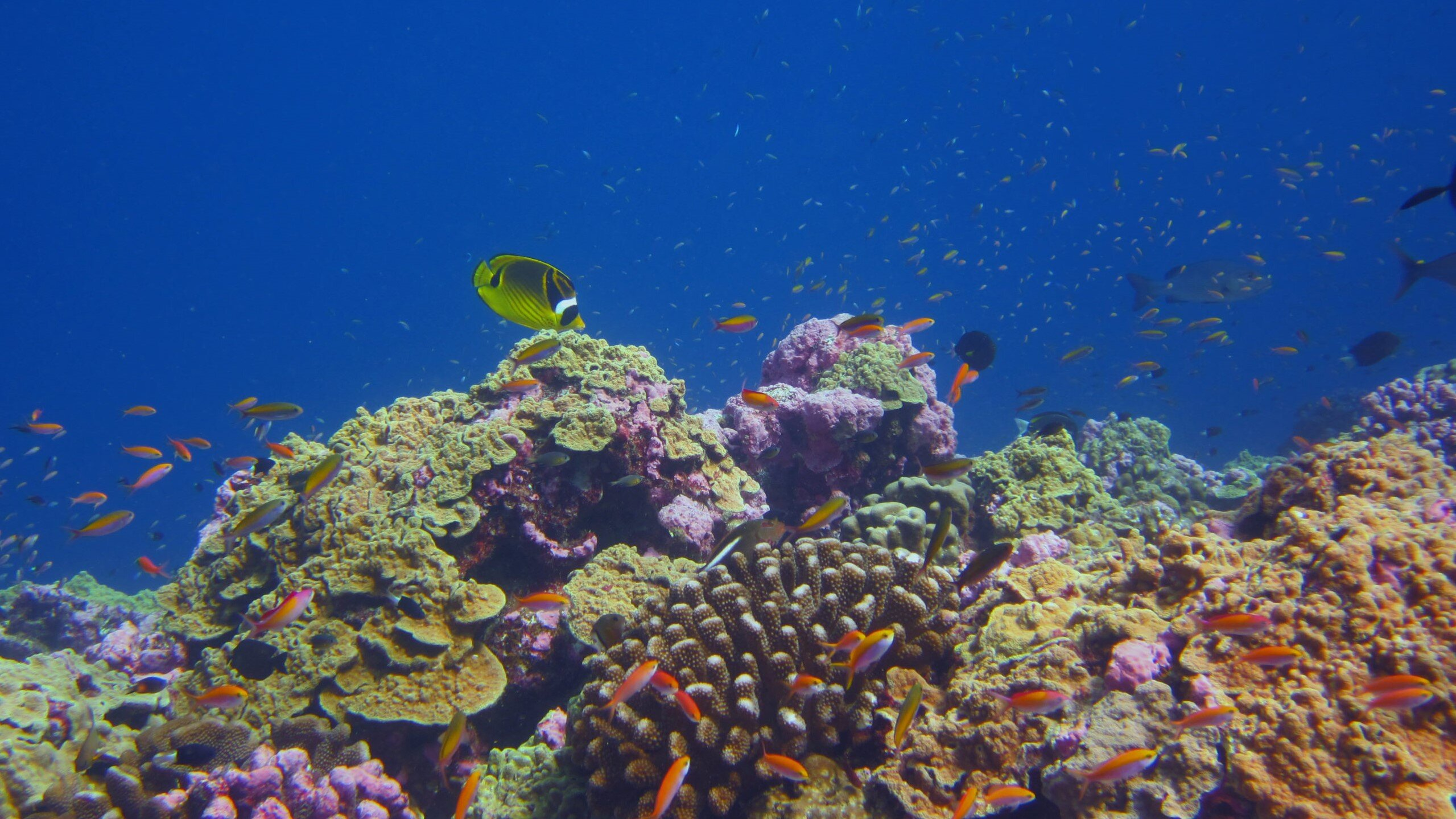 Some coral reefs are keeping pace with ocean warming