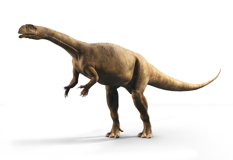 Southern African dinosaur had irregular growth