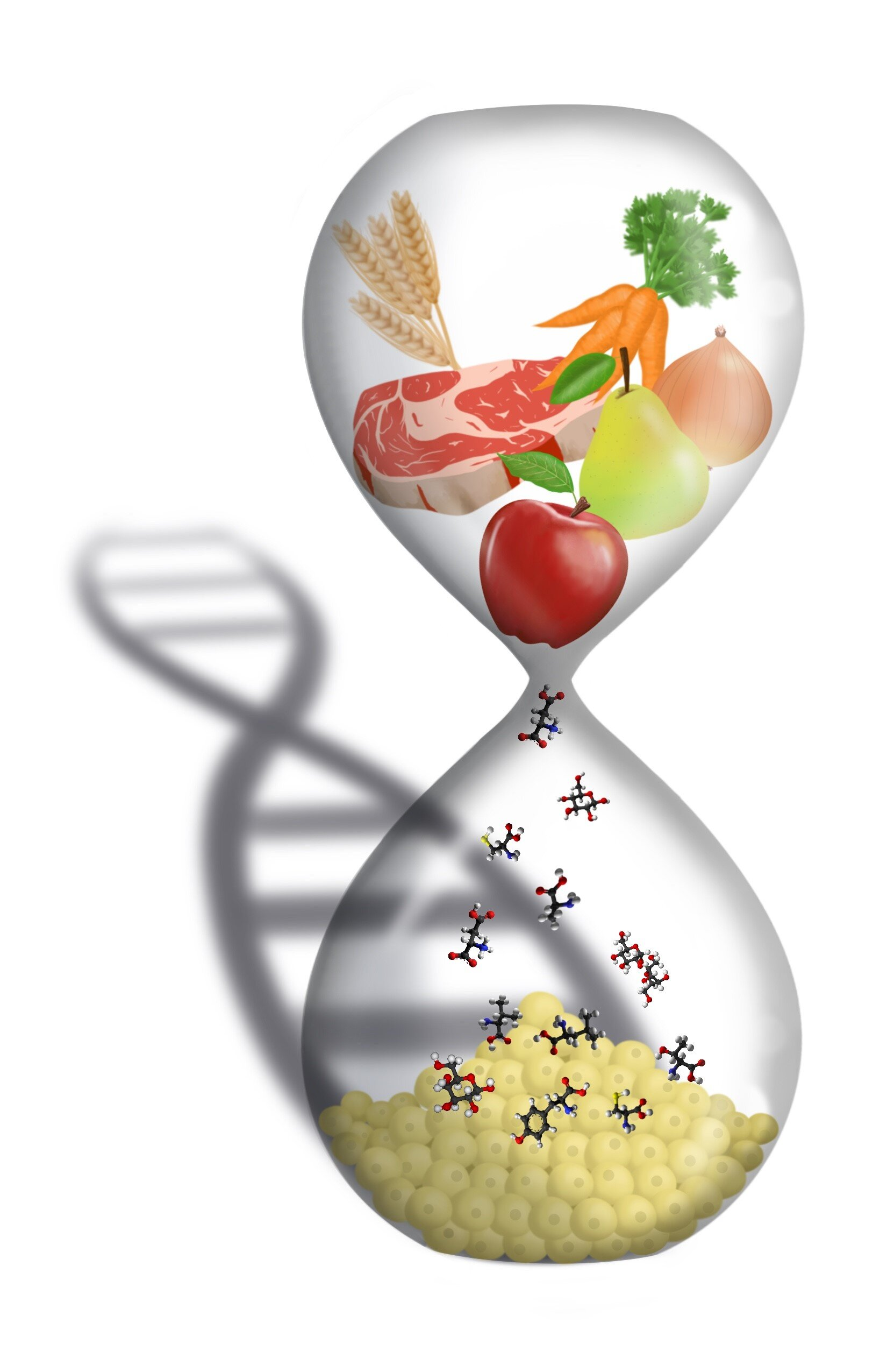 Study: Intermittent fasting 'no magic bullet for weight loss'