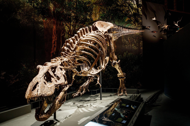 Walk the dinosaur: New biomechanical model shows Tyrannosaurus rex in a swinging gait