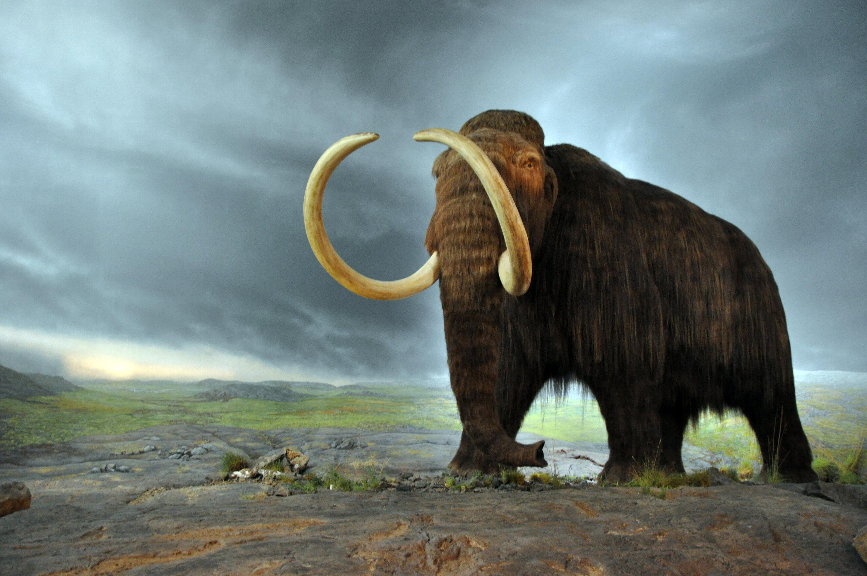 Ancient Animalia - cover
