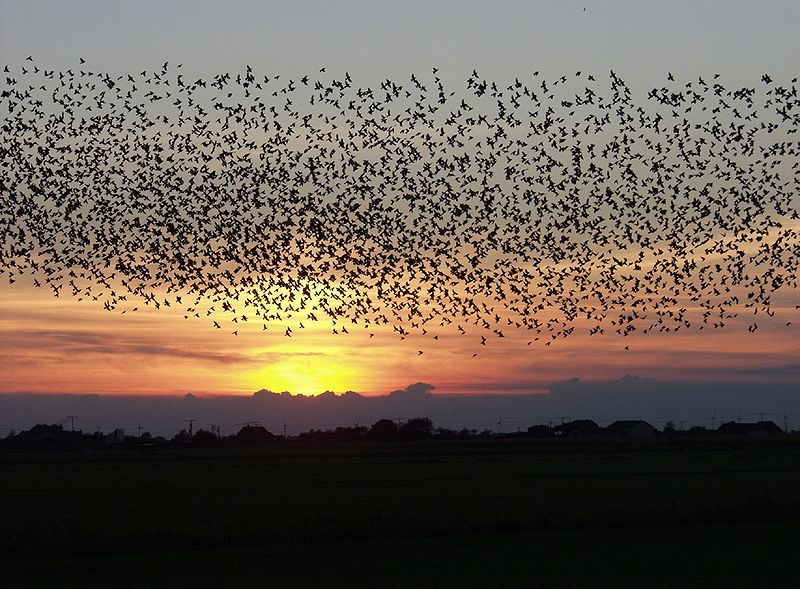 Birds Of A Feather Flock Together To Confuse Potential Predators